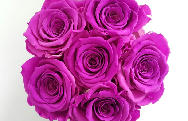 The Meaning Of Pink Roses Love And Gratitude
